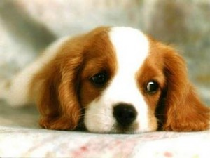 sad_puppy-med